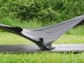 windhover-25cm-x-90cm-bog-oak