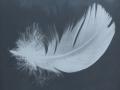 Feather Macro Image on Slate Screen