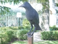 solitary-crow
